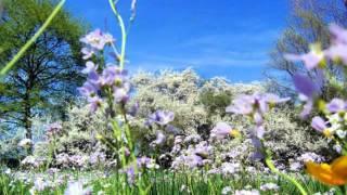 Márcia - Manhã de Primavera