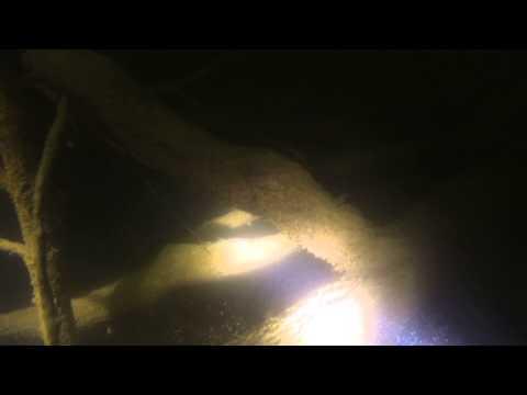 Table Rock Lake Catfish.