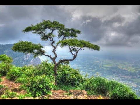 Nelliyampathy Hills in Palakkad, Kerala, India