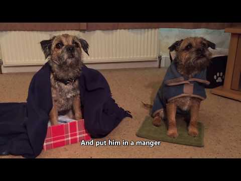 The Border Terrier Dogtivity #BTXmas 2018 (full)