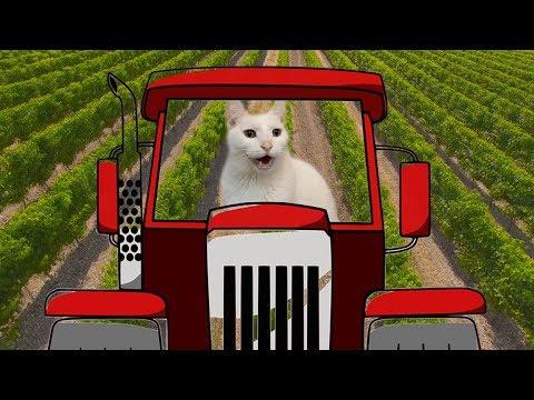 Old Macdonald had a Farm - Cats Version - Singing Cats