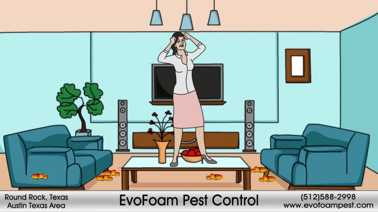 Pest Control Mosquito Austin Texas Evo Foam