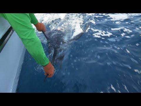 Baja Tuna, Marlin & Beach Fishing