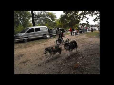 Venek kutyafogathajto verseny 2012