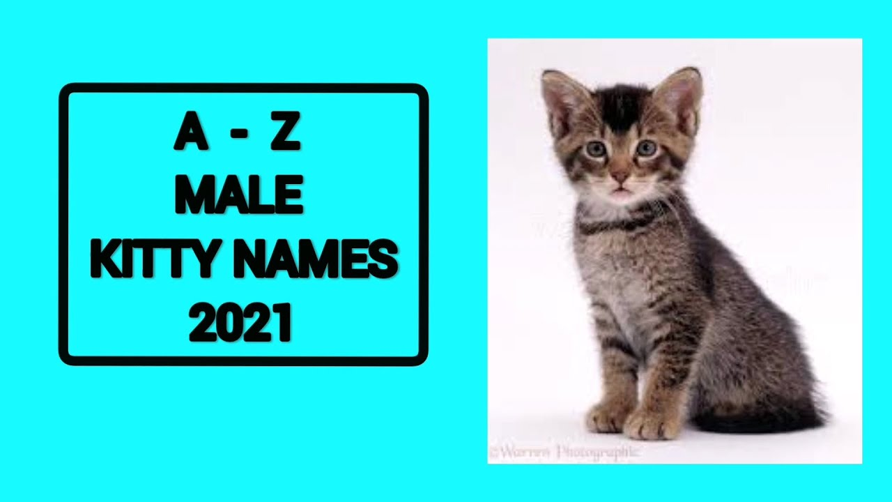 A-Z Boy Cat Names 2021   26 Name Suggestions 2021