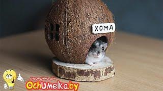 Самодельный домик для хомяка из кокоса