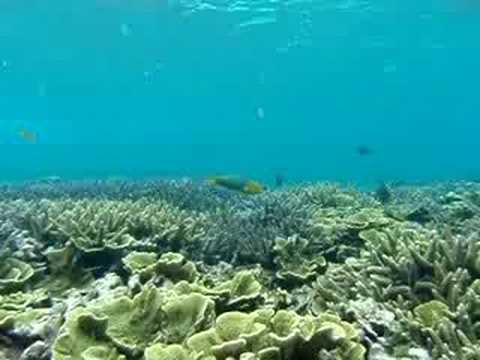 長山港の近くの海。サンゴも熱帯魚も生き生き