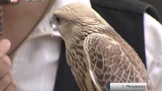 Соколиный двор в Мичуринске станет реабилитационным центром для хищных птиц
