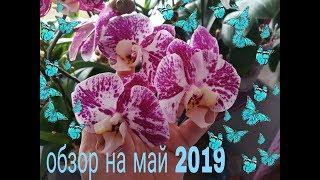 Орхидеи! Обзор на май моих великолепных растений❤