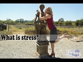 Yoga reduces stress : This is How