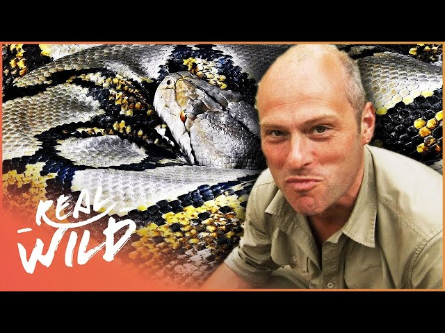 Wet And Wild With An Angry Python! | Bite Me With Dr Mike In USA | Real Wild Documentary
