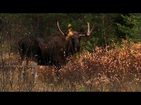 Дикая Природа России - Долины Урала HD