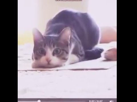Dans eden kedi