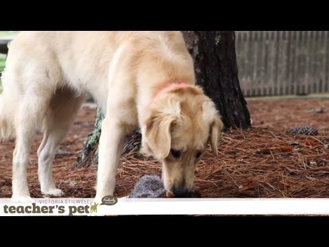 Mental Enrichment With Hide and Seek | Teacher's Pet With Victoria Stilwell