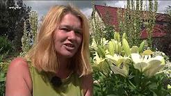 Beliebte Videos – MDR Garten