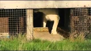 White Lion Cubs - www.shakthi.fm