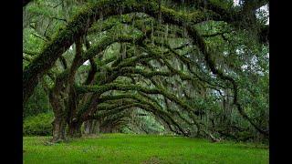 Самые Невероятные Деревья в Мире