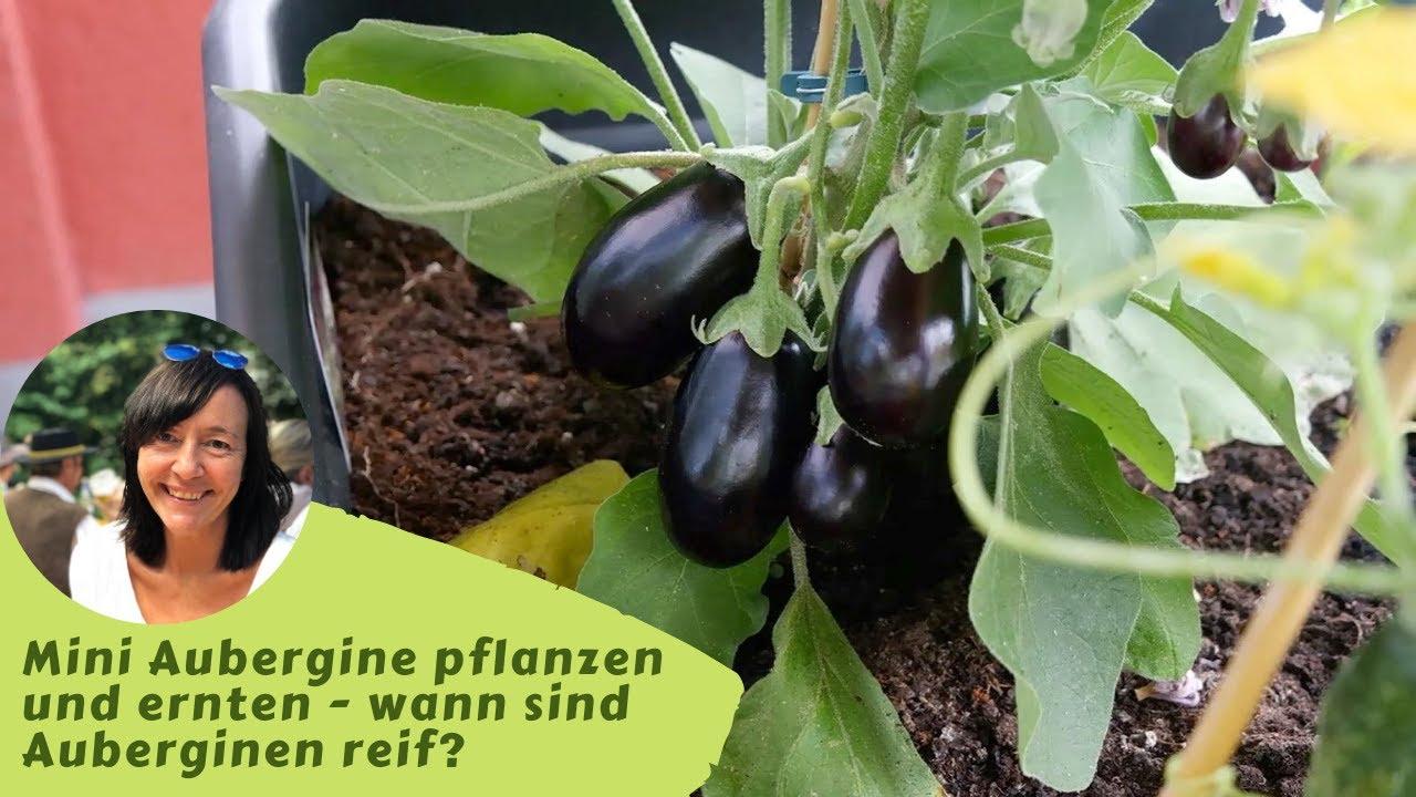 Gemüse auf dem Balkon anbauen   Top 8 Balkongemüse anbauen ...
