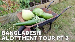 BANGLADESHI ALLOTMENT TOUR & VEGETABLE HARVEST ~ PART 2 #Bangladeshi #BangladeshiGarden