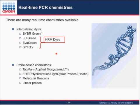 An introduction to real-time PCR and examples of its applications