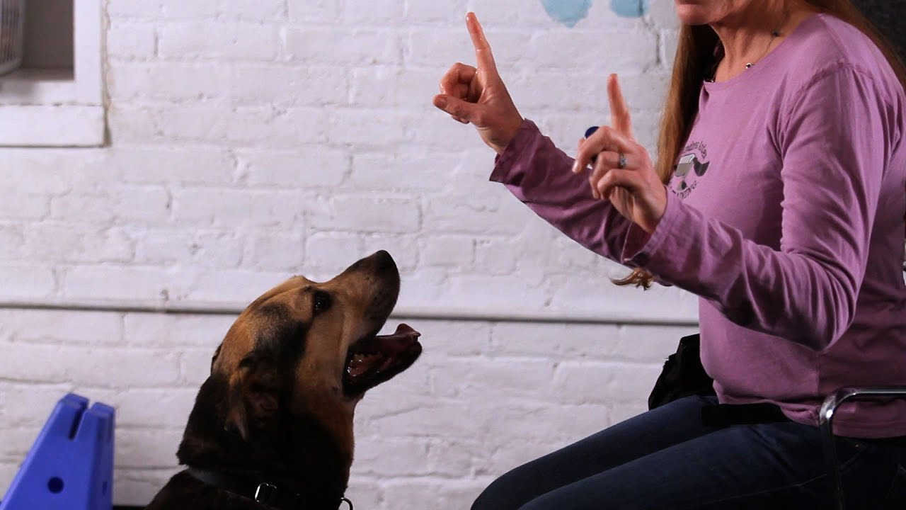 how to teach your dog to talk | dog tricks - youtube