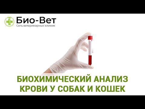 Биохимический анализ крови у собак и кошек. Ветеринарная клиника Био-Вет.