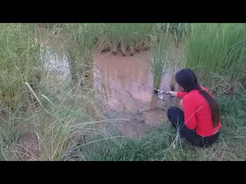fishing-at-the-rice-field- -happy-fishing-at-rural-field- -បានត្រីក្រាញ់