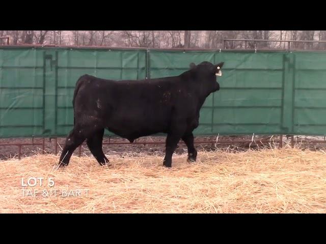 Taliaferro Angus \u0026 T Bar T Angus Ranch - 5