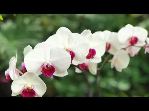 Phipps Conservatory Orchid Room: Beauty in Bloom