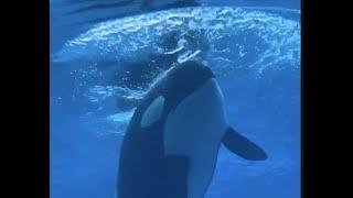 FREE KISKA: Marineland called to free last surviving orca