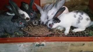 Гранулированный корм для крольчат