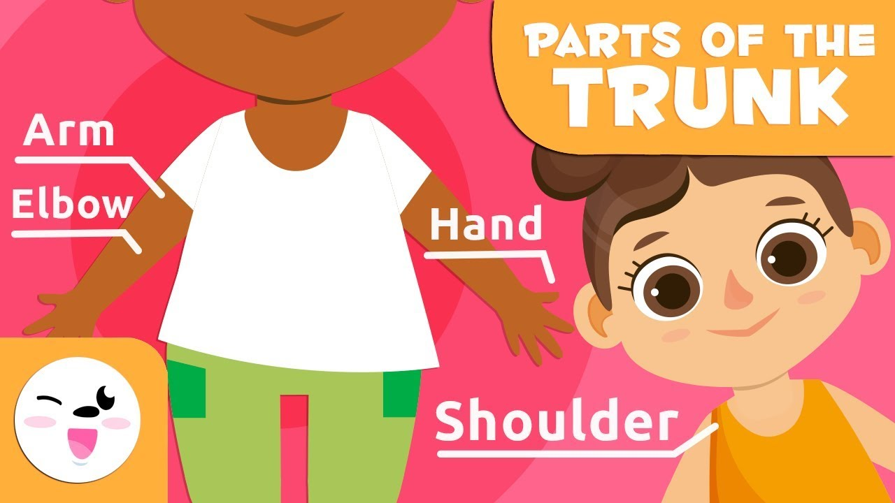 Download The Human Body for Kids - Trunk, Upper, and Lower Limbs