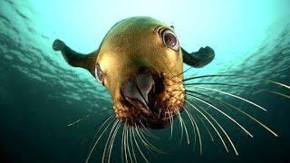 10 Самых Необычных Морей в Мире