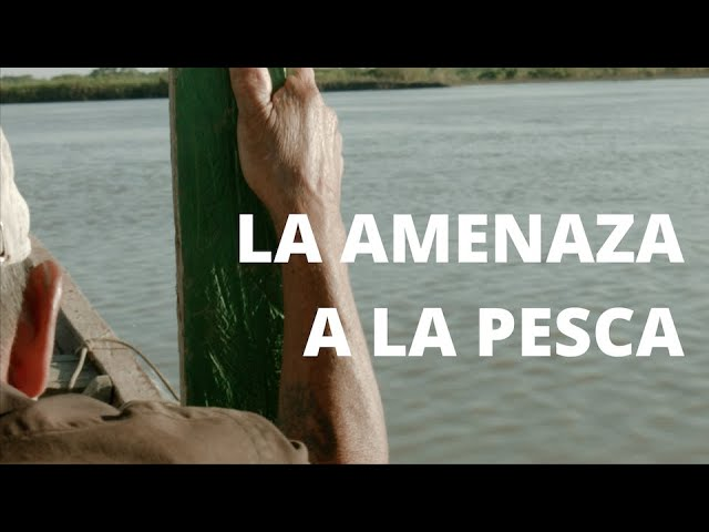 Hidrovía Amazónica, la amenaza a la pesca