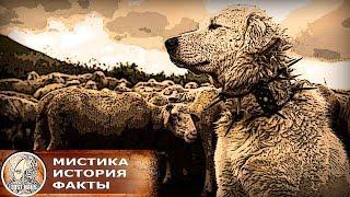Друг или грязный враг человечества, почему собака это зло в мировых религиях