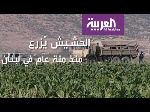 كل ما يجب أن تعرفه عن مشروع تشريع الحشيش اللبناني  - نشر قبل 3 ساعة