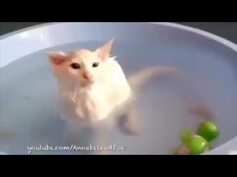 Funny Cats Love Water Compilation 2015   Cats That Love Baths   Funny Videos 2015