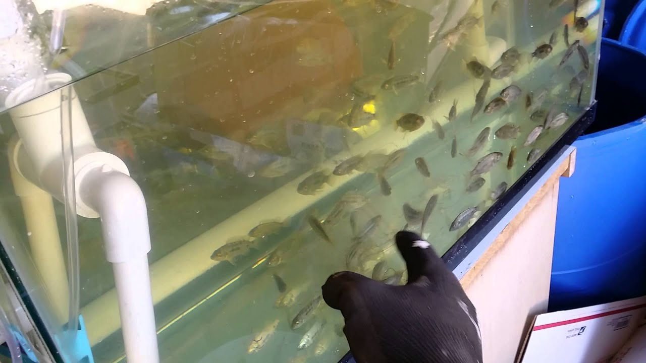 Self Cleaning Fish Tank Garden Self Cleaning Aquaponic Fish Rack Filter Youtube