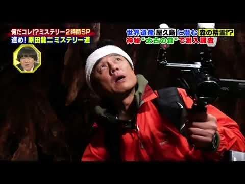 屋久島 ついに、木の精霊を写真に撮った、原田龍二が、凄かった.