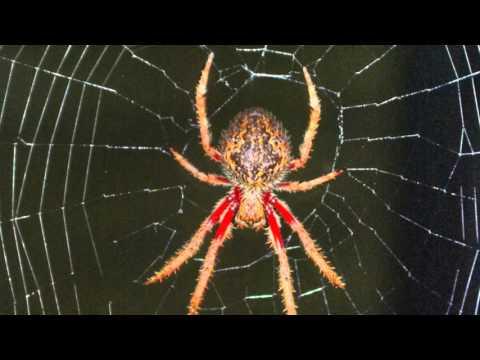 Morpho Minute: Super Spiders