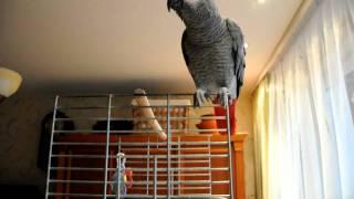 Papuga zako bartas skundžiasi