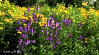 Гармония музыки и природы - Лето. (Чайковский. Времена года.)(Видео с красивыми видами летней природы под музыку П. И. Чайковского -