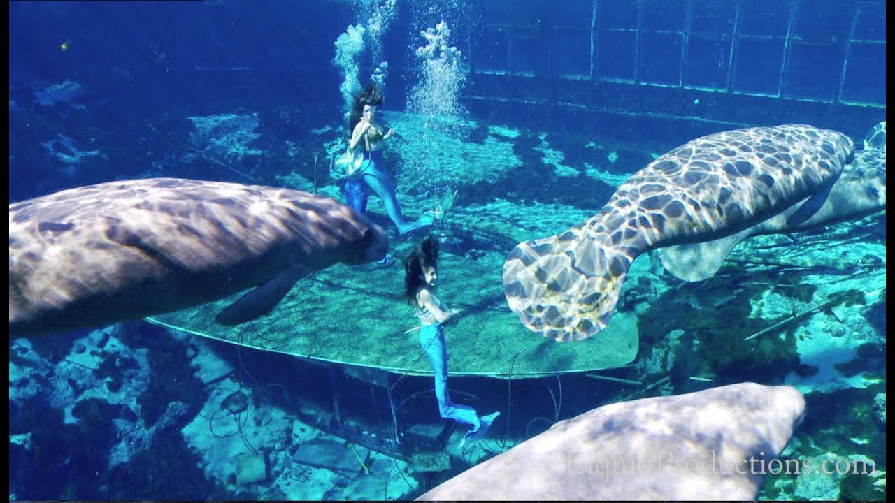 Mermaids & Manatees Weeki Wachee Springs - YouTube Mermaids