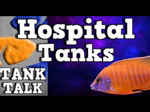 Substitute Hospital Tanks, Tank Talk Presented By KGTropicals!!