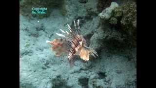 fische korallen unterwasserwelt rote meer