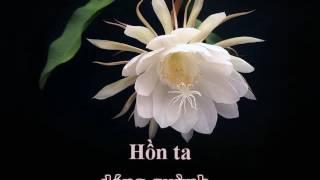 Dạ Quỳnh Hương (Phạm Anh Dũng) - Bảo Yến (Karaoke)