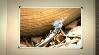 Как сделать мини фонтан для дачи или сада