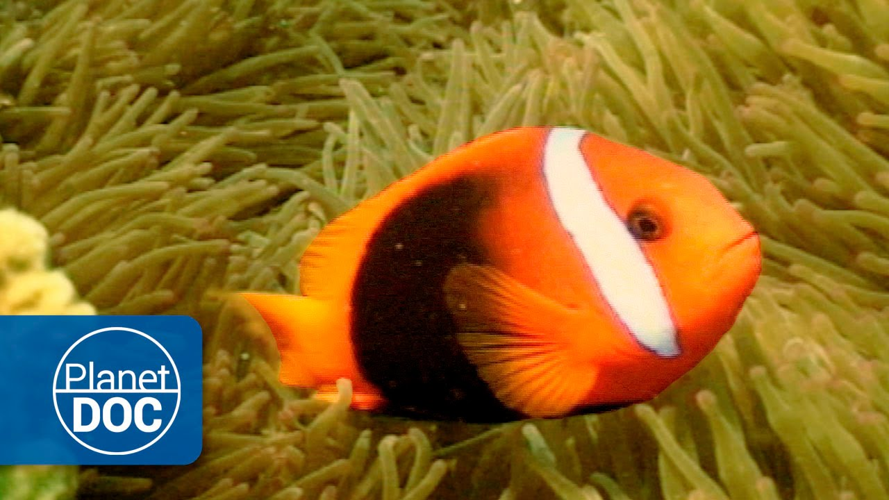 Australia | Arrecife de Coral - YouTube