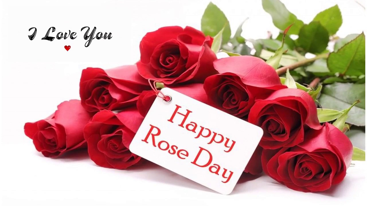 Happy Rose Day 2017 7th February Romantic Wishesgreetings