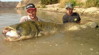 WELS CATFISH WITH PELLET
